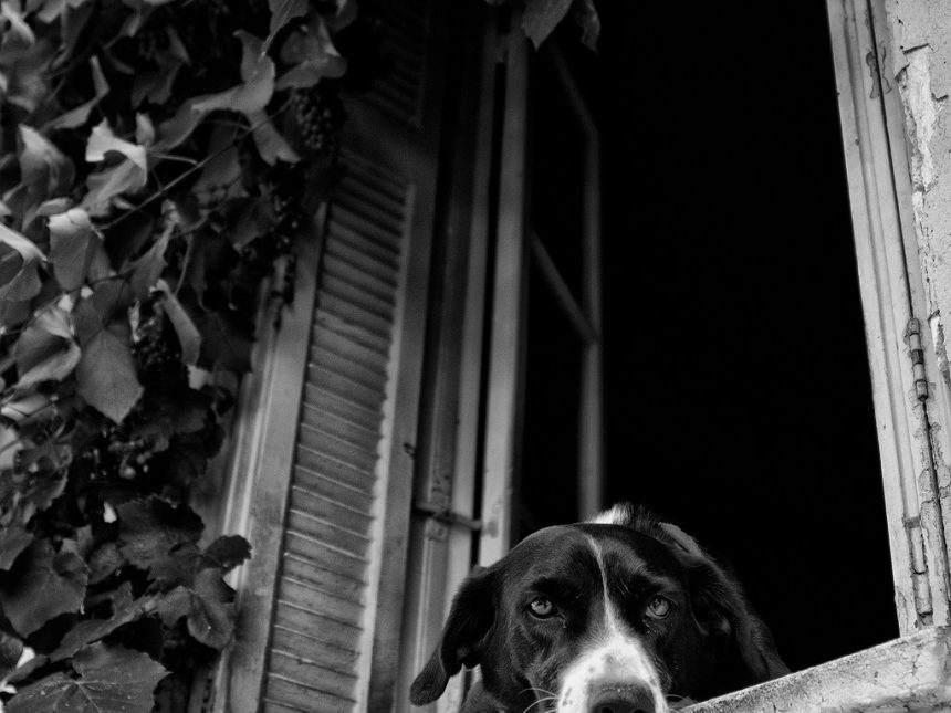 Dog resting in the window